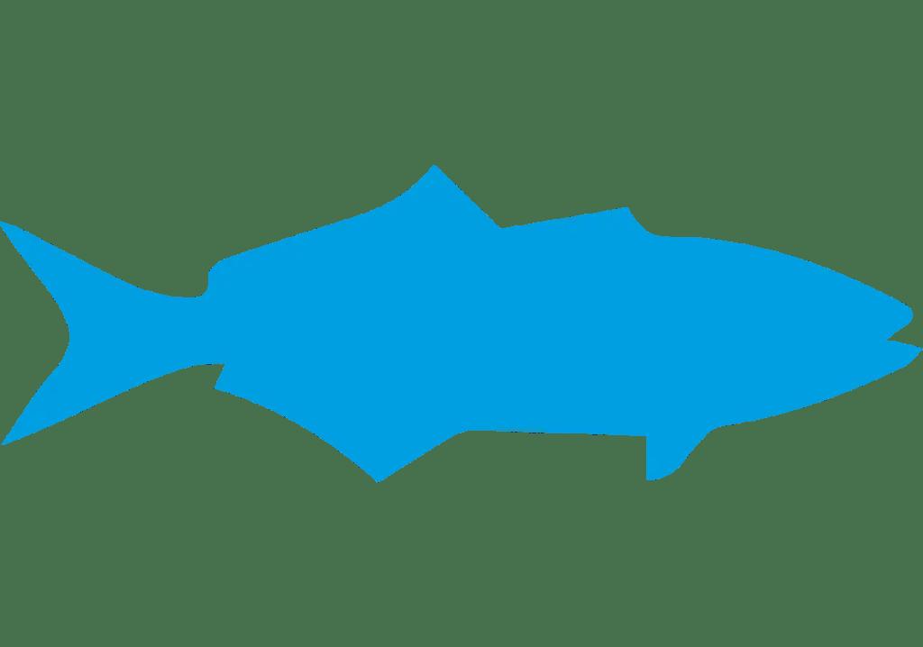 x2 con pescado del océano